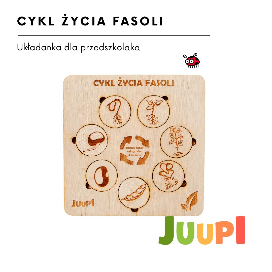 cykl życia fasoli1